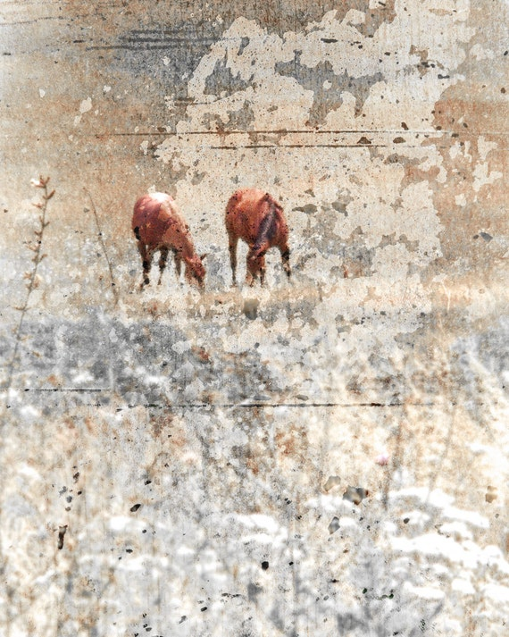 Horse Photograph Rustic Horses in Snow Animal by Catherine Jeltes as galleryzooart on Etsy from etsy.com