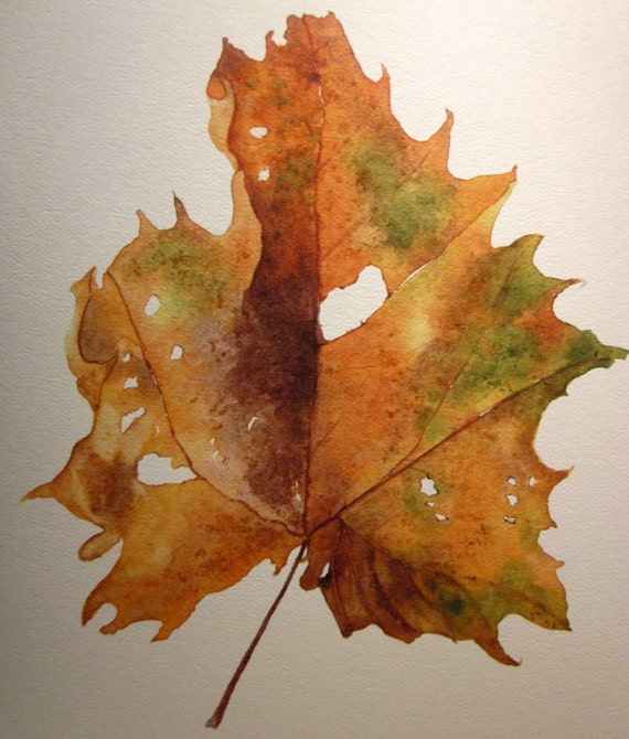 Botanical Watercolor Painting print of Sycamore Leaf