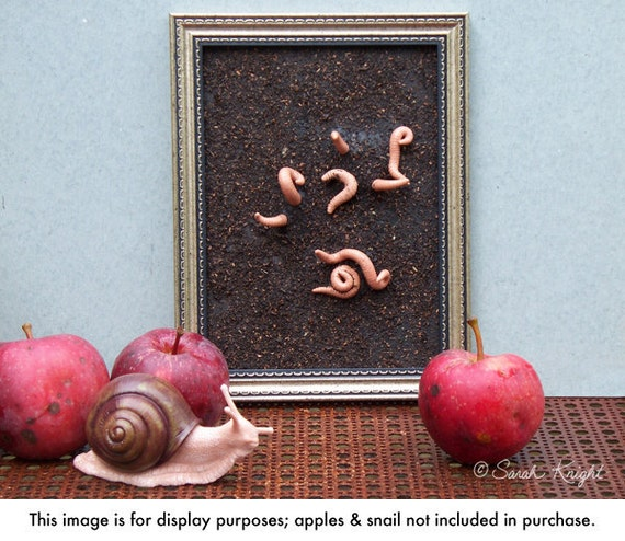 earthworms - 5.5X7.5 inch framed assemblage by Sarah Knight, earthworms worms dirt brown picture frame
