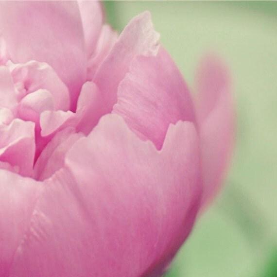 Потертый Chic фотография Цветок - Allure 9x9 фотографии - розовый пион макро весеннего сада печати хозяйка подарок для нее