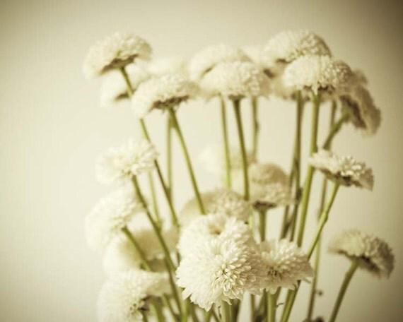 Шепот ко мне.  цветок фотографии.  минималистский печати.  простой белый декор дома.  Искусство 8x10 стены.  готовы к кадру