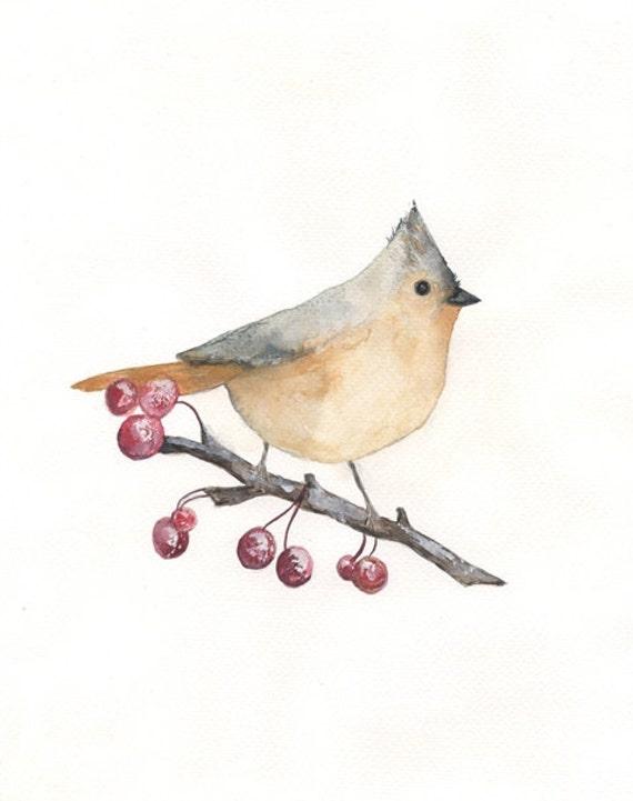 Berries and Birds