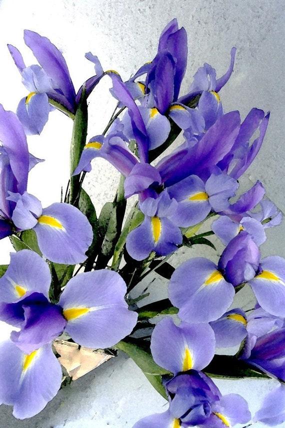 Photograph Flower Irises Purple, 8 x 12,  Watercolor Purple Iris Bouquet, Fine Art Photograph