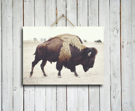 Bison - 10x14 buffalo print - brown home decor - buffalo - bison - rustic decor - brown decor - buffalo decor - western decor