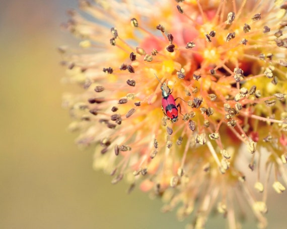Beetle and a Bud // 8x10 Original Fine Art Macro Nature Photograph // bright beetle orange yellow spring