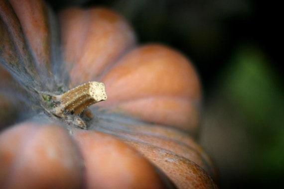 Fairytale Pumpkin Fine Art Photograph
