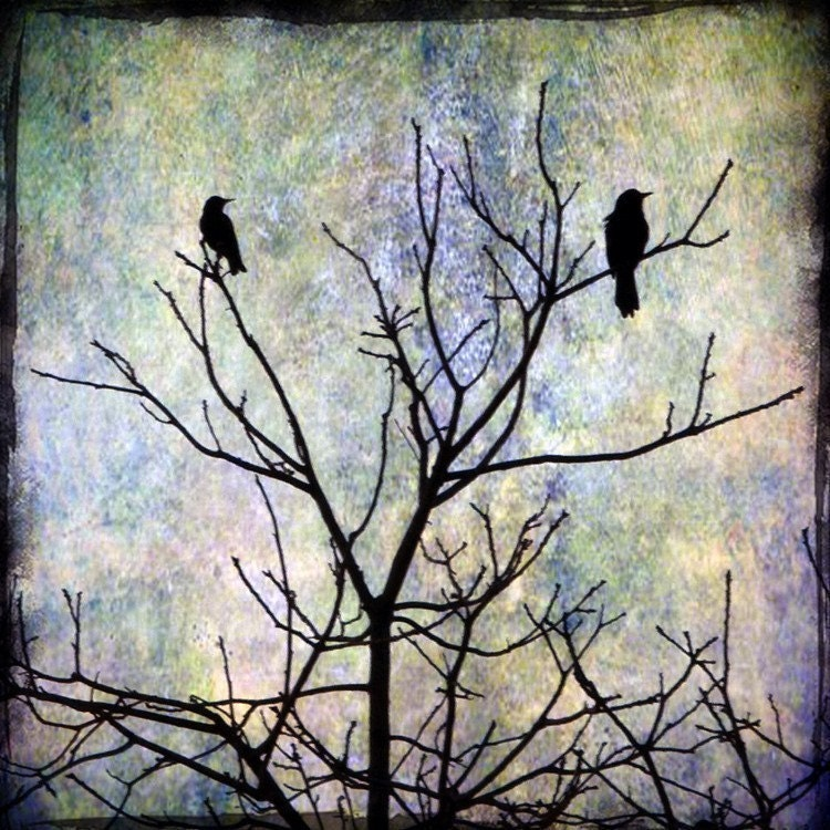 photo of two blackbirds silhouettes