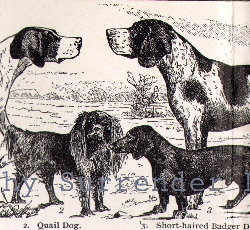 dog breeds chart. 1906 Popular Dog Breeds 27