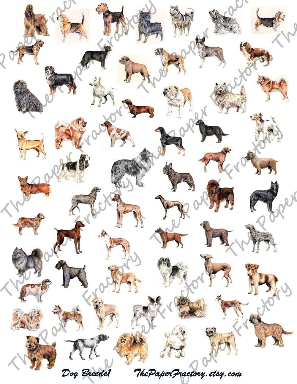 Dog Breeds 1 Digital Collage Sheet A BIG Bunch by ThePaperFractory