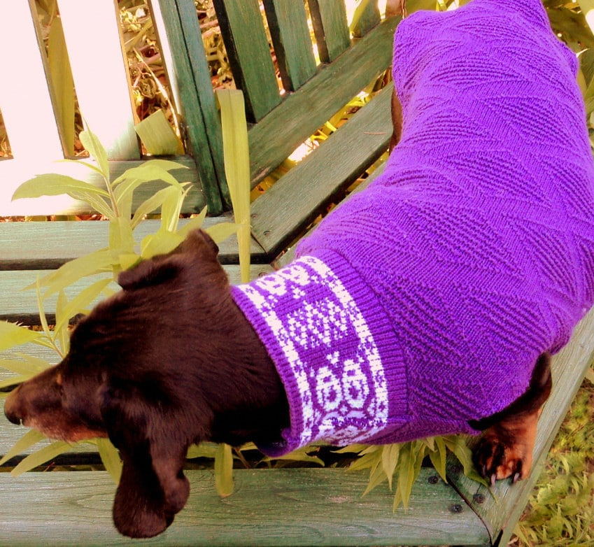Canine Comfort Dog Sweater - Free Patterns - Download Free Patterns
