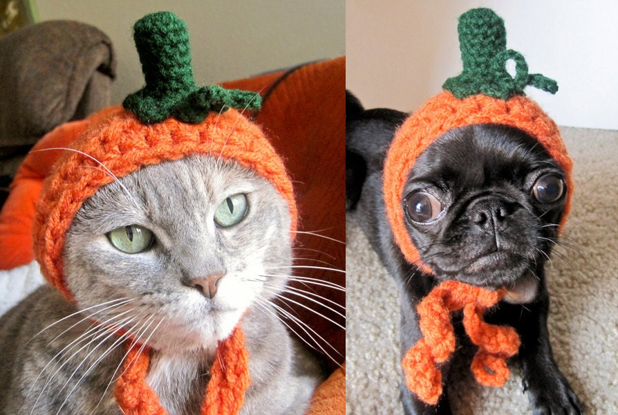 crocheted pumpkin hat for cat or dog