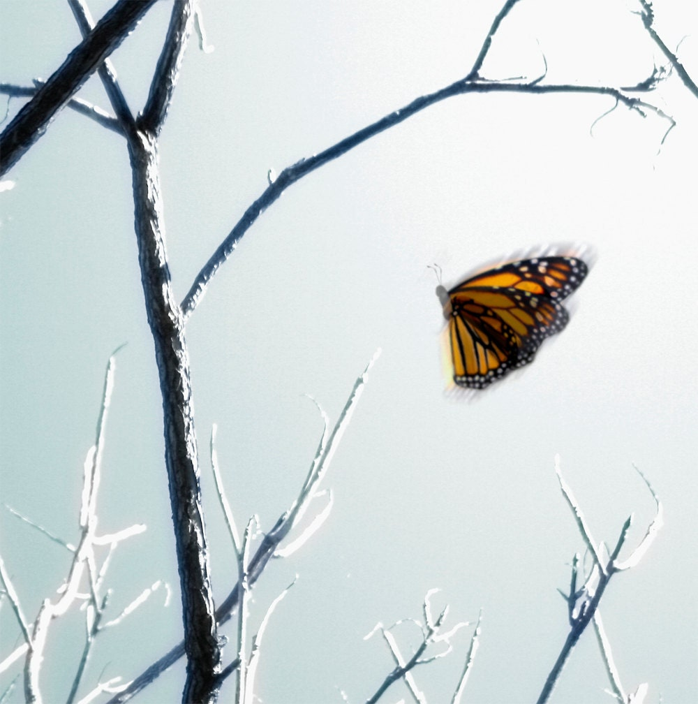 Monarch Butterfly and Bare Tree Branches