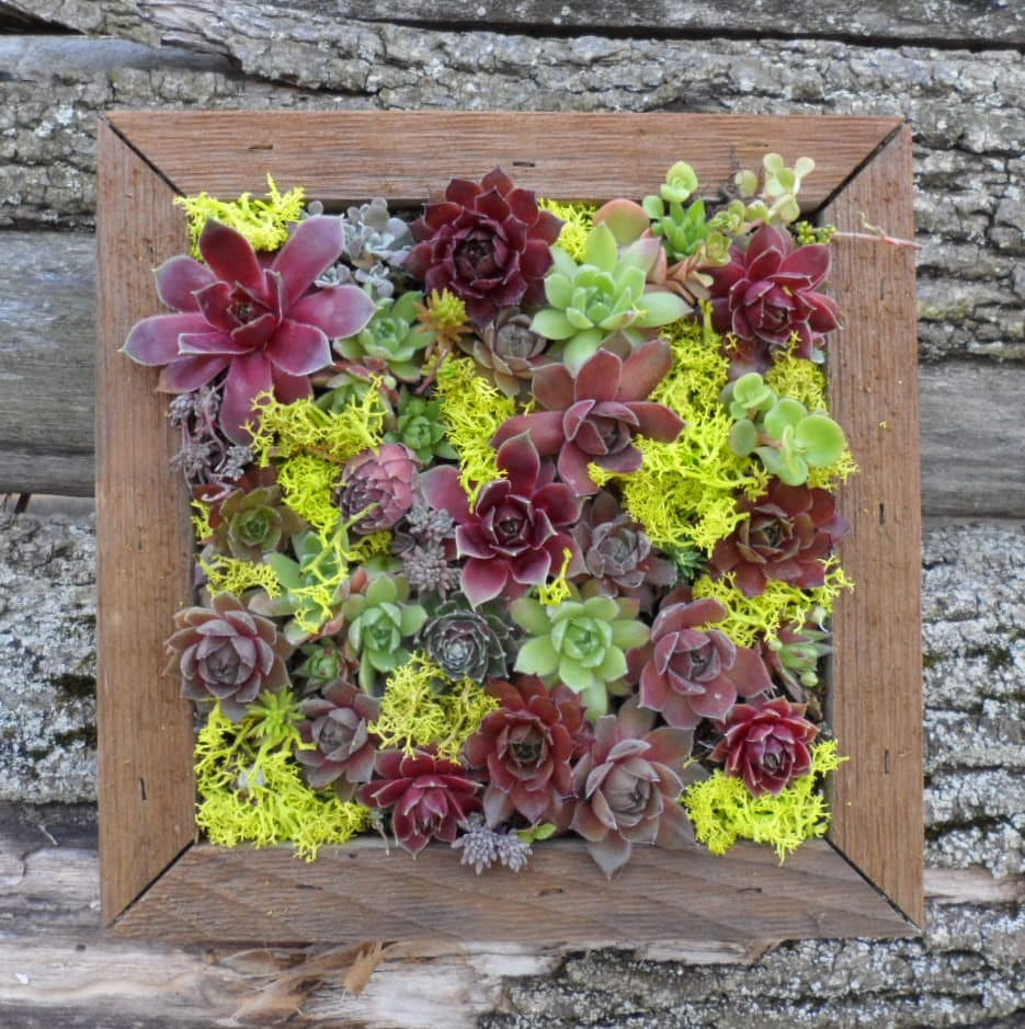 Creations and inspirations grow it for Vertical wall garden kits