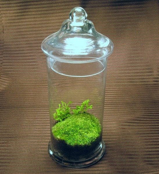 il fullxfull.47788330 Etsy Pick: Moss Terrariums