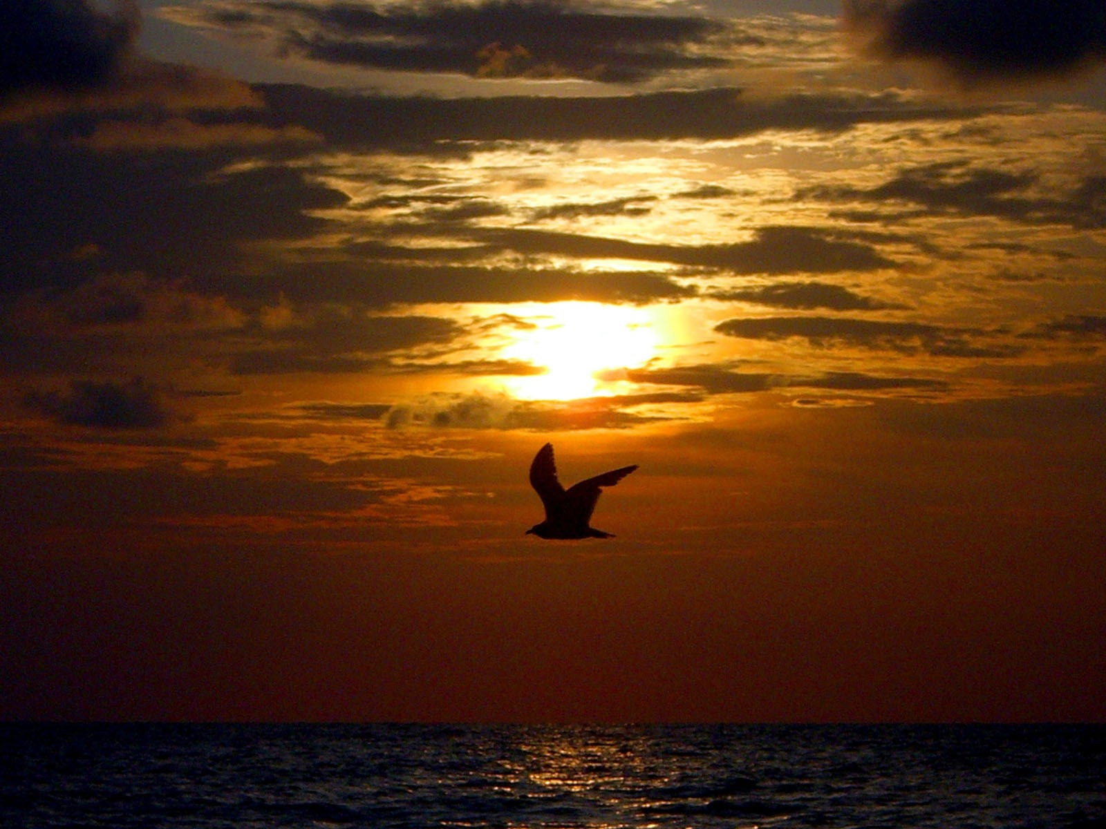 the silhouette of a bird in flight at sunset