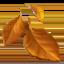 fallen_leaf
